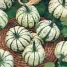 PROFI, Zelenina SEMO – Tykev okrasná Sweet Dumpling, p9219