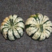 PROFI, Zelenina SEMO - Tykev okrasná Sweet Dumpling, p9219 (Cucurbita pepo)