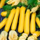 PROFI, Zelenina SEMO - Tykev cuketa, p0600 (Cucurbita pepo. L.)