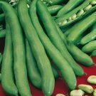 PROFI, zelenina semo - Bob zahradní, p0970 (Faba vulgaris major)