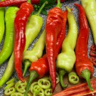 PROFI, Zelenina SEMO - Paprika roční pálivá, p2500 (Capsicum annuum L.)