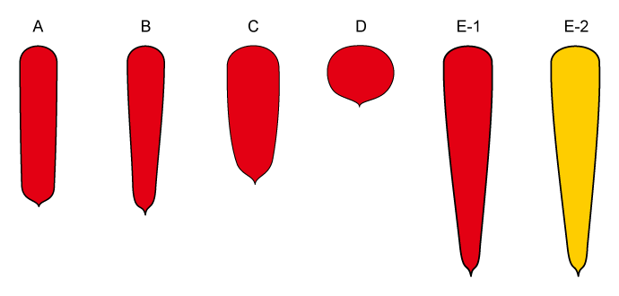 PROFI, Zelenina SEMO - Mrkev obecná - tvary, p2200