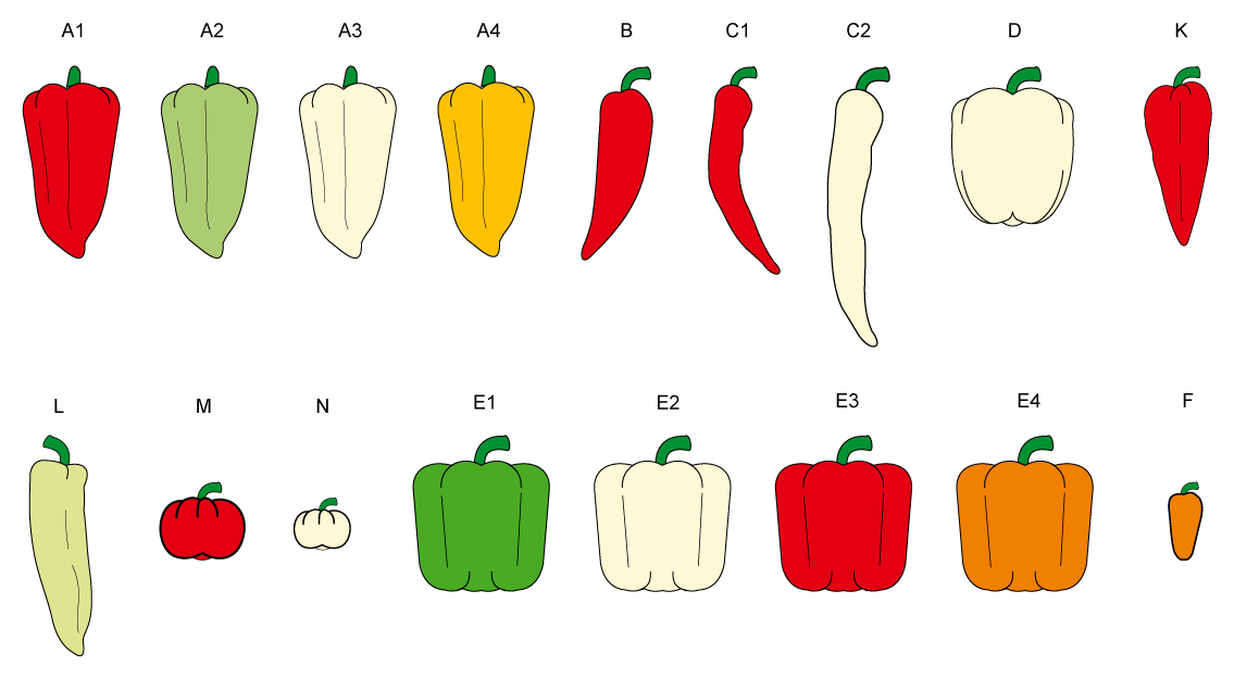 PROFI, Zelenina SEMO - Paprika roční sladká - tvary, p2500
