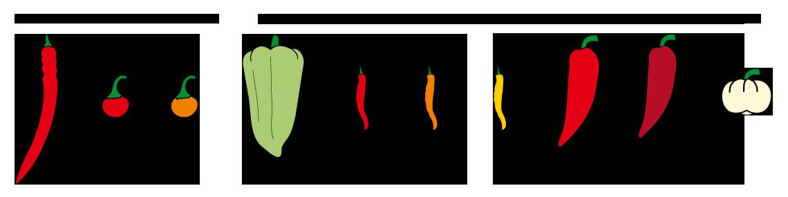 PROFI, Zelenina SEMO - Paprika roční pálivá- tvary, p2500