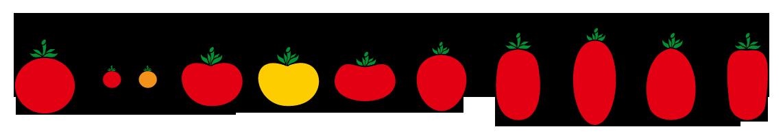 PROFI, Zelenina SEMO - Rajče keříčkové - tvary, p3100