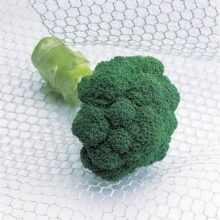 PROFI, Zelenina TAKII - Brokolice Quinta F1, p0218 (Brassica oleracea L. convar botrytis (L.) Alef. var. cymosa Duch.)