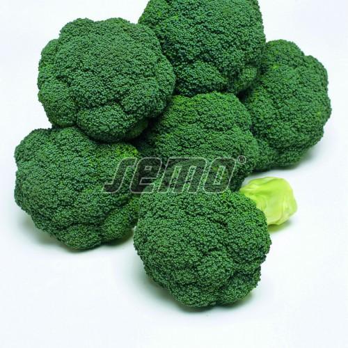 PROFI, Zelenina TAKII - Brokolice Atlantis F1, p0226 (Brassica oleracea L. convar. botrytis (L.) Alef. var. cymosa Duch.)
