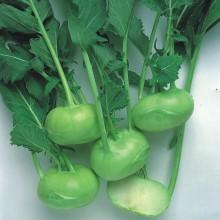 PROFI, Zelenina TAKII - Kedluben Timpano F1, p0306 (Brassica oleracea L. convar. acephala (DC) var. gongylodes)
