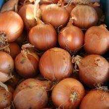 PROFI, Zelenina TAKII - Cibule kuchyňská Superon F1, p0540 (Allium cepa L.)