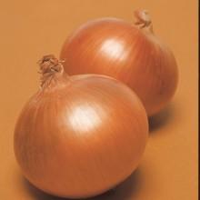 PROFI, Zelenina TAKII - Cibule kuchyňská Despina F1, p0544 (Allium cepa L.)
