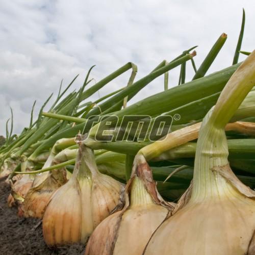 PROFI, Zelenina TAKII - Cibule kuchyňská Medusa F1, p0545 (Allium cepa L.)