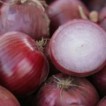 PROFI, Zelenina TAKII - Cibule kuchyňská Linus F1, p0558 (Allium cepa L.)