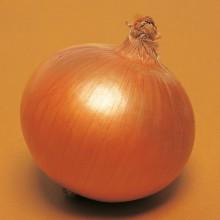 PROFI, Zelenina TAKII - Cibule kuchyňská Galatea F1, p0573 (Allium cepa L.)