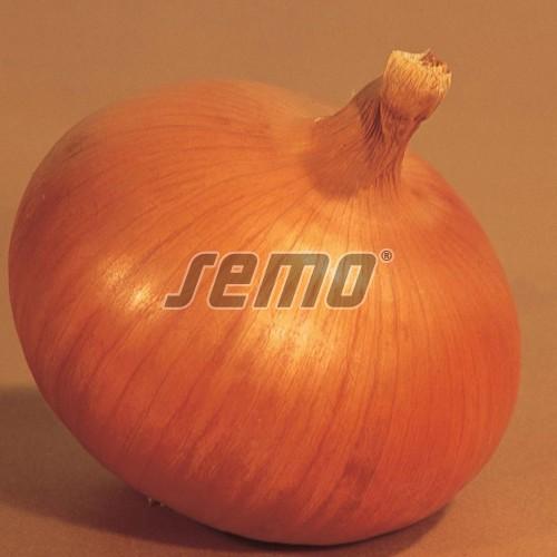 PROFI, Zelenina TAKII - Cibule kuchyňská Keep Well F1, p0577 (Allium cepa L.)