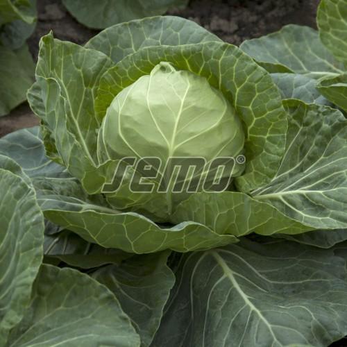 PROFI, Zelenina TAKII - Zelí hlávkové Ortus F1, p4216 (Brassica oleracea L. convar.capitata (L.) Alef. var. alba DC.)