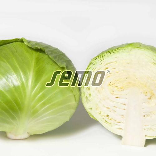 PROFI, Zelenina TAKII - Zelí hlávkové Predeco F1, p4248 (Brassica oleracea L. convar.capitata (L.) Alef. var. alba DC.)