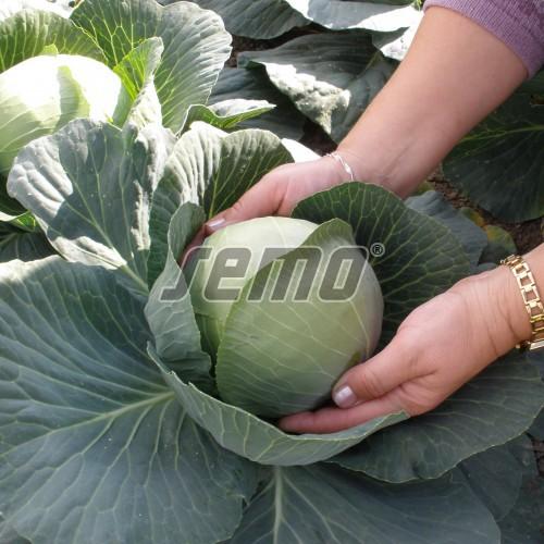 PROFI, Zelenina TAKII - Zelí hlávkové Prestar F1, p4253 (Brassica oleracea L. convar.capitata (L.) Alef. var. alba DC.)
