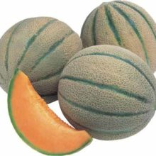 PROFI, Zelenina TAKII - Meloun cukrový Exalto F1, p4707 (Cucumis melo L)