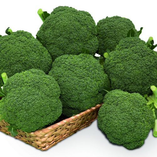 PROFI, Zelenina TAKII - Brokolice Thunder Dome F1, p0220 (Brassica oleracea L. convar botrytis (L.) Alef. var. cymosa Duch.)
