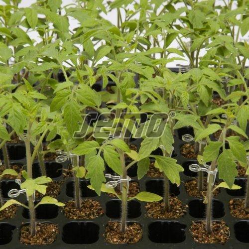 PROFI, Zelenina TAKII - Podnož na roubování Radar F1, p3183 (Solanum lycopersicum)