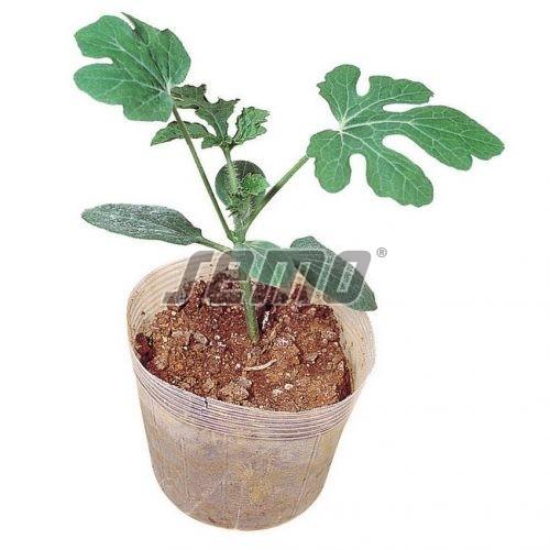 PROFI, Zelenina TAKII - Podnož na roubování Tetsukabuto F1, p4041 (Cucurbita maxima x Cucurbita moschata)