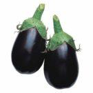 PROFI, Zelenina TAKII, Lilek, p1900 (Solanum melongena L.)