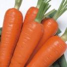 PROFI, Zelenina TAKII, Mrkev obecná, p2200 (Daucus carota L.)