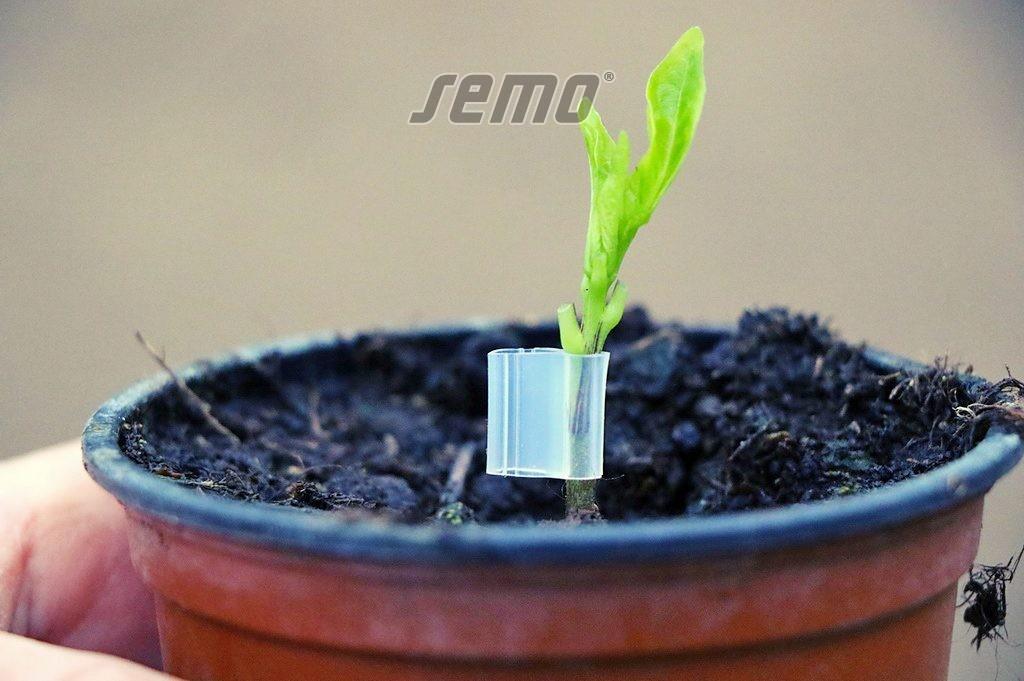 SEMO - roubování paprik